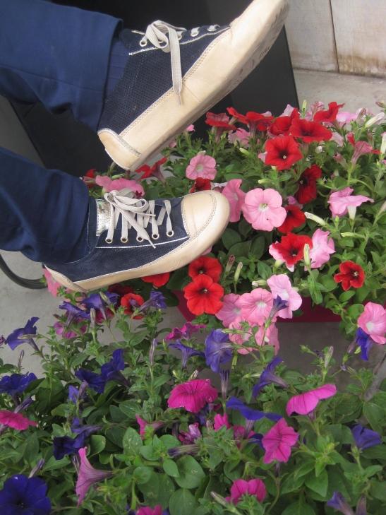 Elige color hoy para tus flores